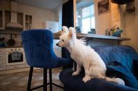 Экзотические животные в квартире, Фото: 8