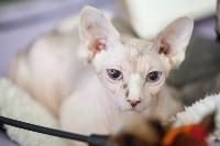 В Туле прошла выставка «Пряничные кошки» , Фото: 17