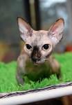 Выставка кошек в Искре, Фото: 14