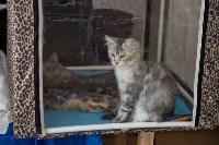 Выставка кошек в ГКЗ. 26 марта 2016 года, Фото: 1