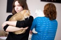 Выставка кошек. 4 и 5 апреля 2015 года в ГКЗ., Фото: 111