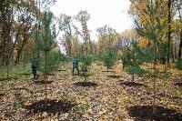 В Центральном парке Тулы появился сосновый бор «Слободы», Фото: 42