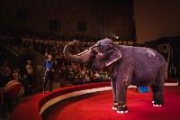 «Шоу Слонов» в Тульском цирке, Фото: 25