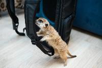 Экзотические животные в квартире, Фото: 10