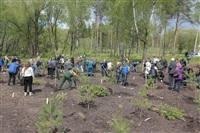 Высадка молодого леса, Фото: 34