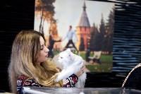 Выставка кошек. 4 и 5 апреля 2015 года в ГКЗ., Фото: 47