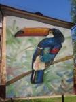 Вот такой красочный тукан  приземлится на стене  дома №9 по ул. Немцова. Автор Юлия Засыпкина (Тула). , Фото: 5