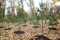 В Центральном парке Тулы появился сосновый бор «Слободы», Фото: 49