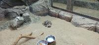 Малыши-сурикаты , Фото: 4