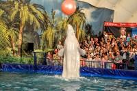 Шоу карибских дельфинов, Фото: 10