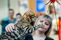 """Выставка """"Пряничные кошки"""" в ТРЦ """"Макси"""", Фото: 64"""