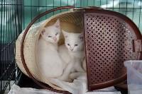 III благотворительный фестиваль помощи животным, Фото: 14