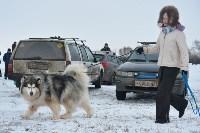 Праздник северных собак на Куликовом поле , Фото: 40