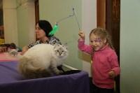Выставка кошек. 21.12.2014, Фото: 1