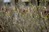 Весна 2020 в Туле: трели птиц и первые цветы, Фото: 20