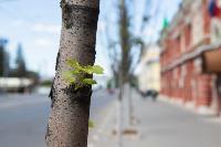 засохшие деревья на проспекте, Фото: 17