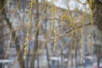 Мартовский снег в Туле, Фото: 40