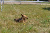 В Ясной поляне стартовал турнир по конному спорту, Фото: 73