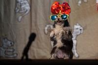 Театр кошек в ГКЗ, Фото: 62