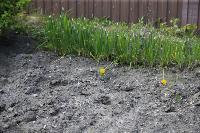Бродячие собаки погубили рассаду тулячки и довели ее до сердечного приступа, Фото: 10