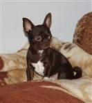 Похищенные собаки, Фото: 37