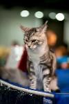 Пряничные кошки, Фото: 19