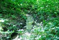 В реку Иншинку несколько лет стекает канализация, Фото: 4