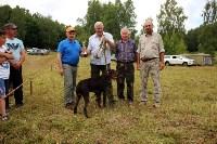 Выставка охотничьих собак под Тулой, Фото: 90