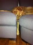 Кошки и собаки, проигравшие битву с мебелью, Фото: 19
