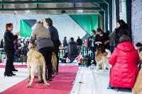 Выставка собак в Туле, Фото: 28