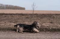 Дворняги, дворяне, двор-терьеры: 50 фото самых потрясающих уличных собак, Фото: 21