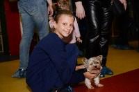Выставка собак DogLand, Фото: 9