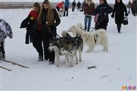 Куликово поле. Гонки на собачьих упряжках., Фото: 123