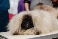 """Выставки собак в ДК """"Косогорец"""", Фото: 26"""