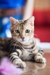 Международная выставка кошек. 16-17 апреля 2016 года, Фото: 56