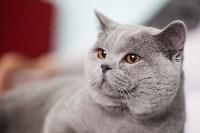 Международная выставка кошек. 16-17 апреля 2016 года, Фото: 28