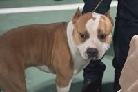 Выставка собак в Туле 26.01, Фото: 55