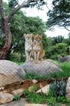 Конкурс красоты в Зимбабве. Рассказывает Наташа Полуэктова, Фото: 51