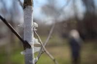 Посадка деревьев в Комсомольском парке, Фото: 41
