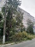 Читатель о вырубке деревьев на ул. Революции: «Была красивая зеленая улица, а теперь…», Фото: 10
