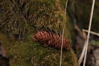 Посадка деревье в Ясной Поляне. 17.04.2015, Фото: 59