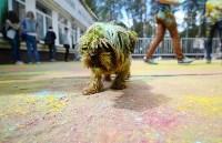 Фестиваль ColorFest в Туле, Фото: 72