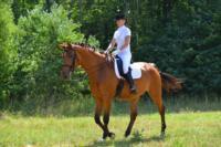 В Ясной поляне стартовал турнир по конному спорту, Фото: 63