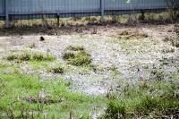 Богородчан затопило канализацией, Фото: 17