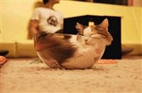 Жидкие коты, Фото: 8