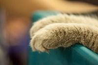 """Выставка """"Пряничные кошки"""". 15-16 августа 2015 года., Фото: 75"""