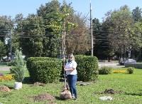Высадка деревьев и растений ко Дню города, Фото: 9