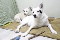 Пристроенные домашние животные, Фото: 11