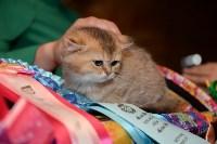 Выставка кошек в Искре, Фото: 82