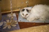 Волонтеры спасли кошек из адской квартиры, Фото: 89